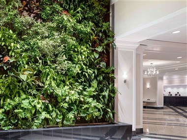 Green Wall in the Lobby