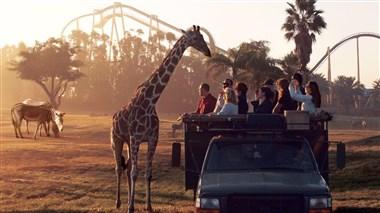 Serengeti Tour with Busch Gardens
