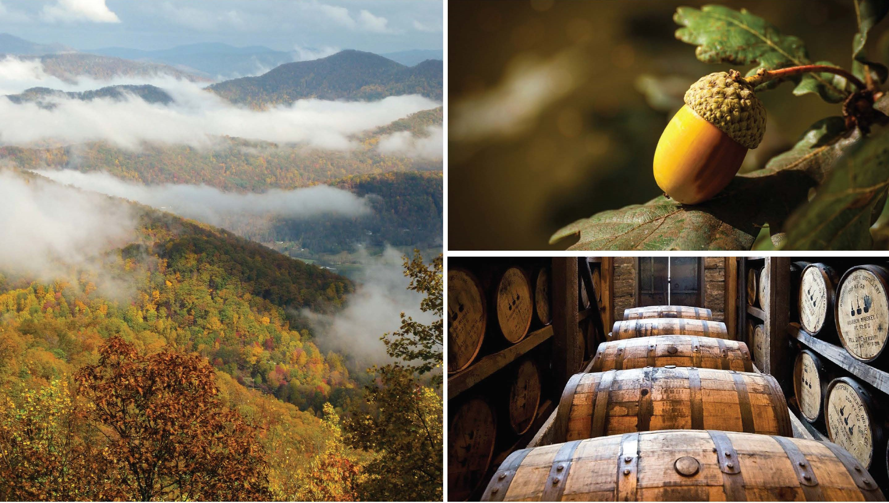 EPN Breakfast- January 14, 2020 The Bourbon Barrel Connection: Revitalizing Appalachian Ohio economies and oak-dominated forests