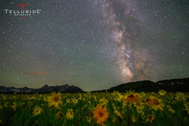 Wildflowers under the Milky Way