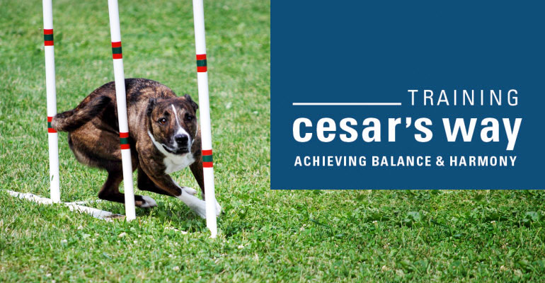 February 2020 Florida  Essentials of Dog Psychology