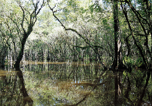 Swamp Big Cypress National Preserve