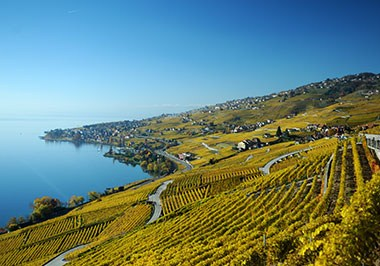 Lausanne Vineyards