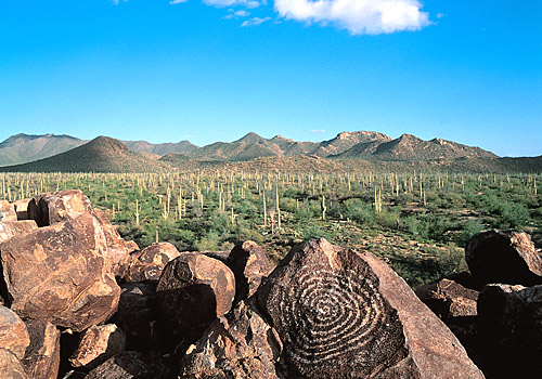 Signal Hill Petroglyph at Saguaro National Park