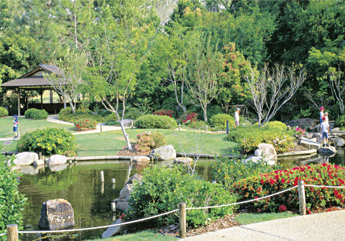Mount Coot-tha Botanical Gardens