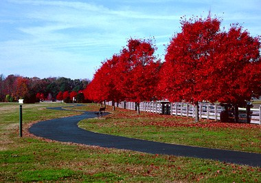 Riverview Farm Park
