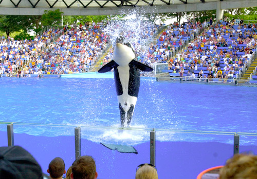 Shamu's Adventure at SeaWorld San Antonio