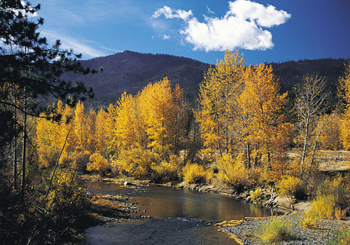Truckee River with Fall Trees