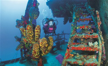 Variety of dive sites throughout the USVI