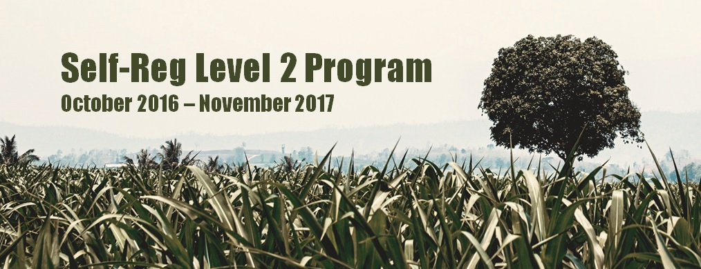 Self-Reg Level 2 Certificate - Cohort 1: October 2016 - November 2017