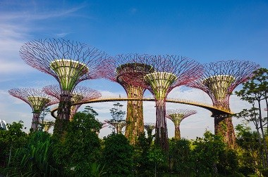 Supertrees at Gardens by the Bay