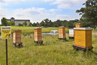 Our Bee Hives