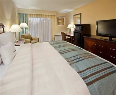 King Bedded Guestrooms