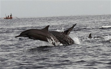 Lovina Dolphin watching tour