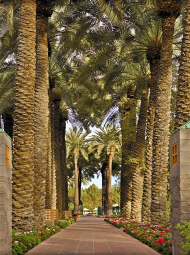 Palm Walkway