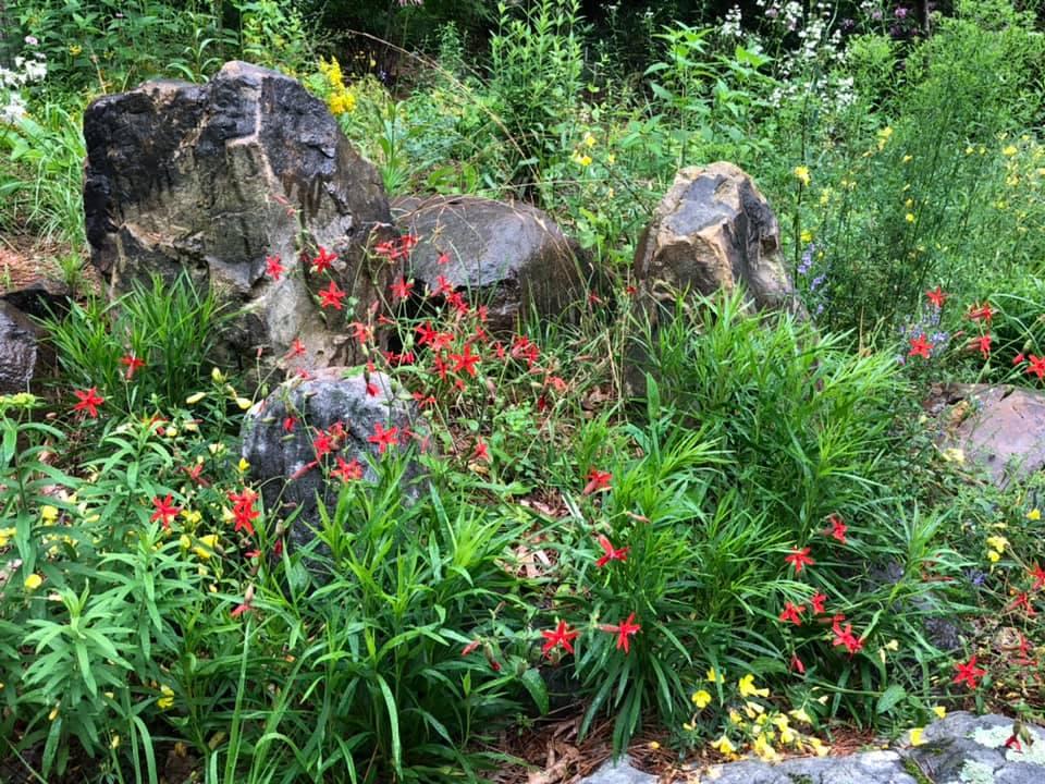 duke-gardens-bill-lefevre-052720c