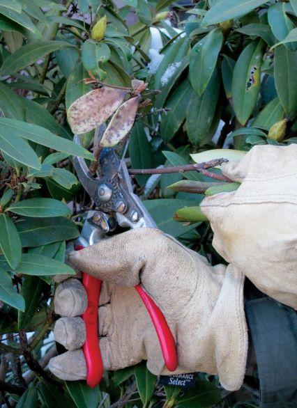 Duke-Gardens-pruning 008e-sm resized