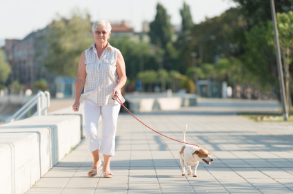 iStock_walking with dog fotokostic
