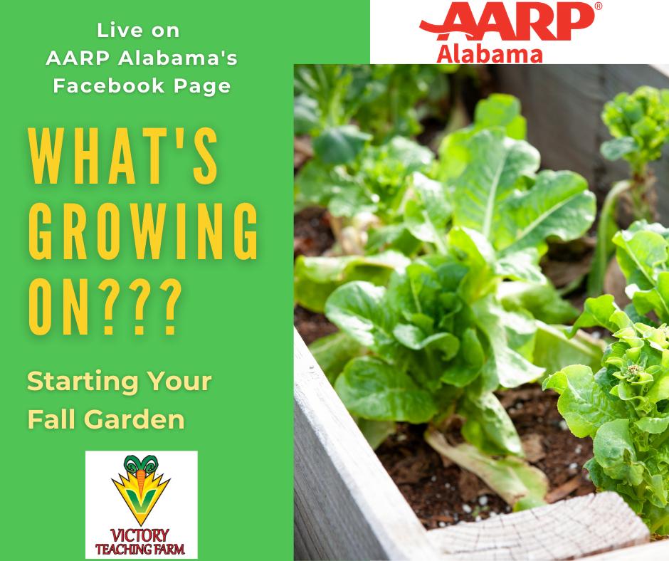 Starting Your Fall Garden