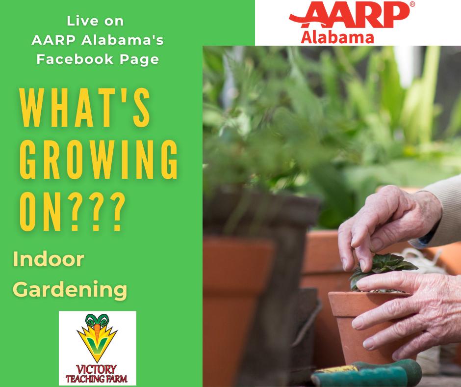 Ep 4 Indoor Gardening