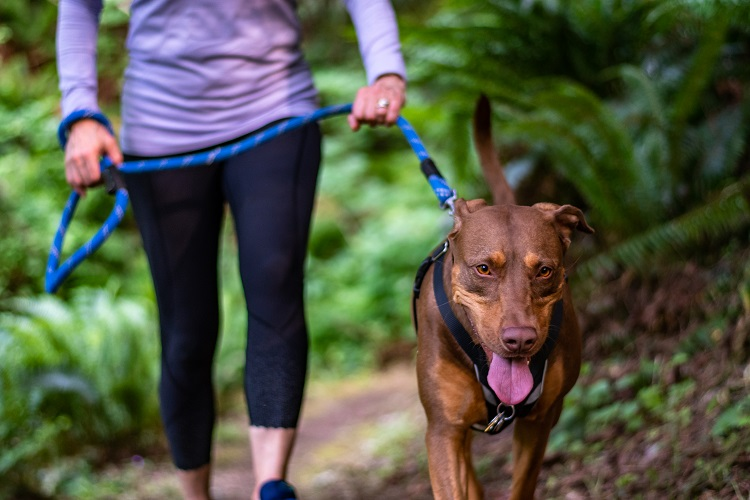 iStock-hike with dog_N8tureGrl