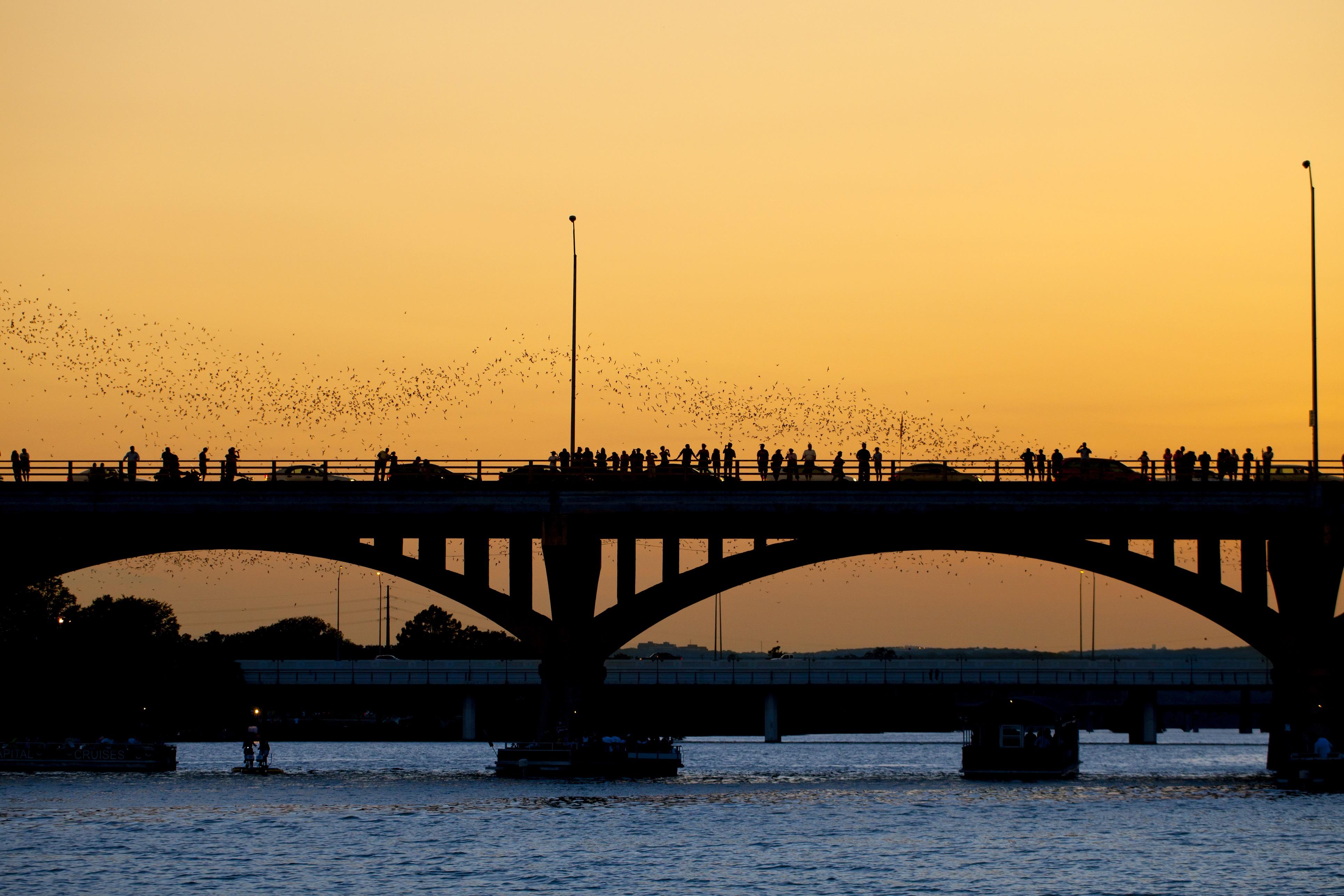 iStock-Bat Colony Bridge View_Aneese