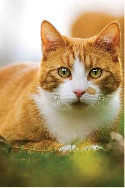 feline cat small