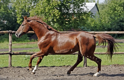 bigstock_Horse_236113