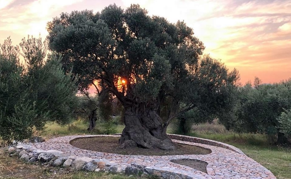 Olive Oil and Health: New Frontiers and Partnerships for Research and Education