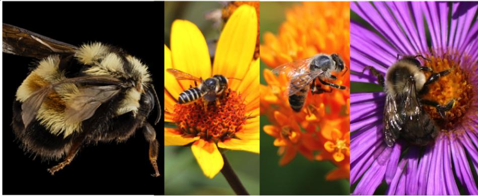 OSU Pollinator Summit: Our Threatened Bees