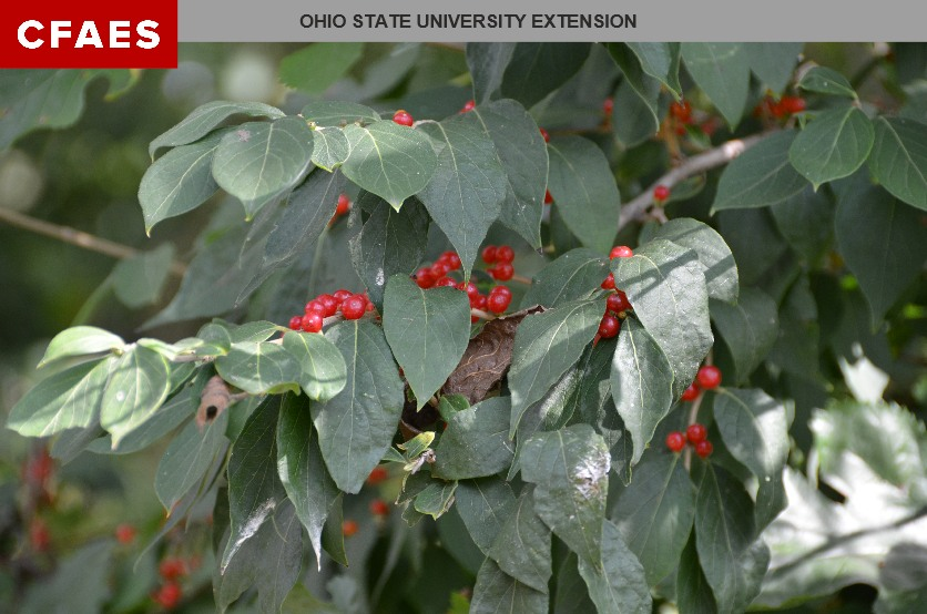 Sharpening Your Scouting Skills for Invasive Species