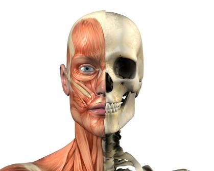human-anatomy-istock compressed