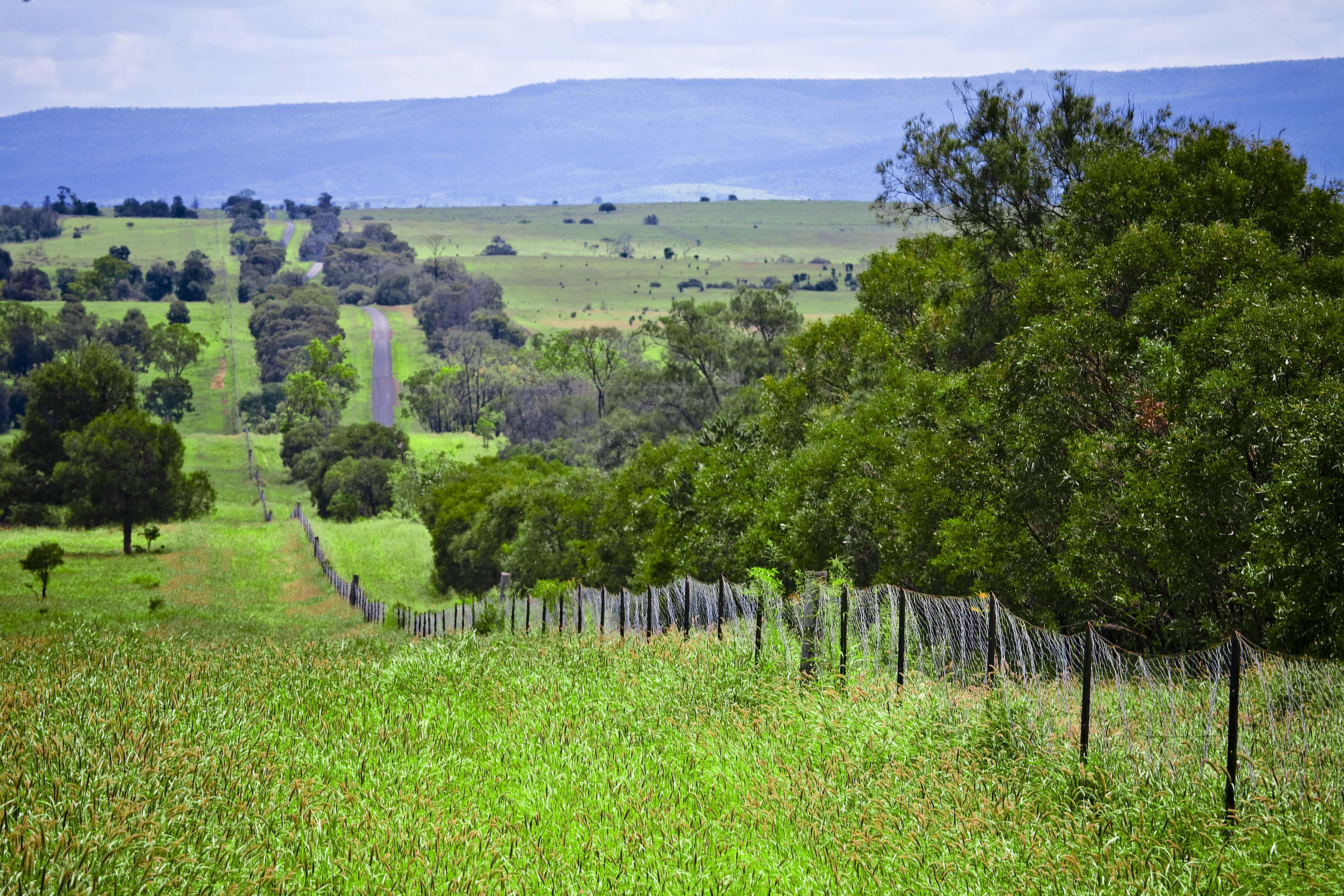 Injune, Dingo Barrier Fence, Womblebank Gap Rd, Ro
