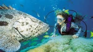 Diver and potato cod