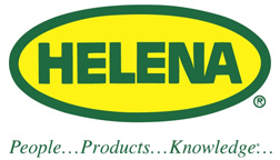 Helena-web