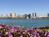 Downtown Skyline in Spring -Courtesy Joanne DiBona