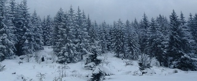 winter snow scene - banner