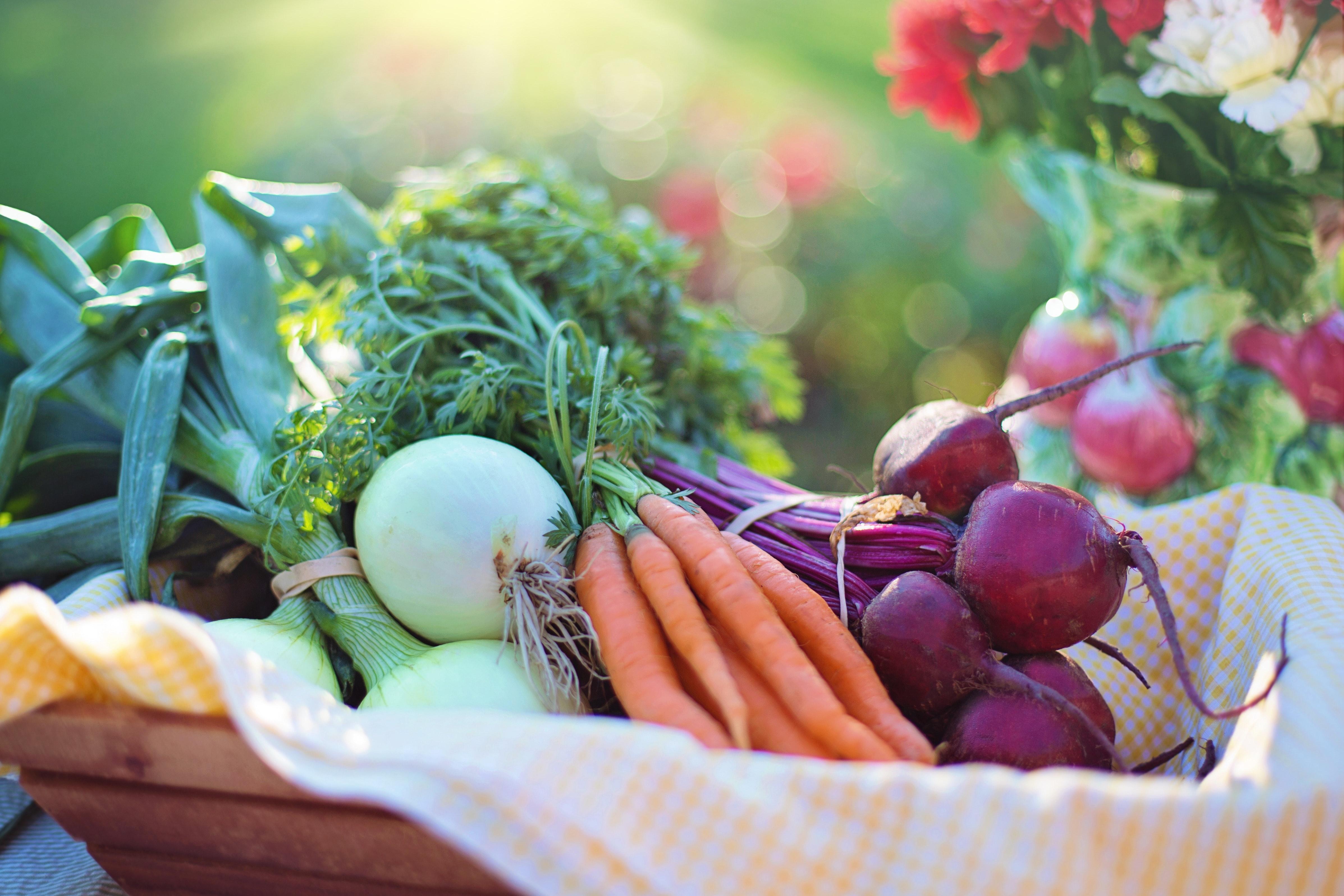agriculture-basket-beets-533360