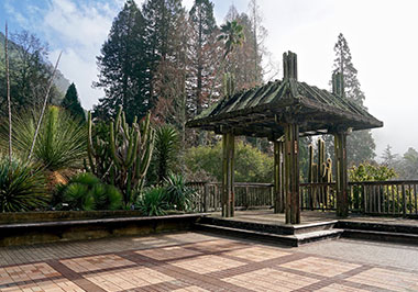 UC Botanical Garden Berkeley Deck
