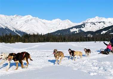 Dog Sledding Girdwood