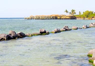 Palm tree beach Jeddah