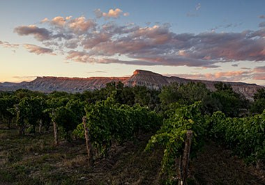 Vineyard, Grand Junction