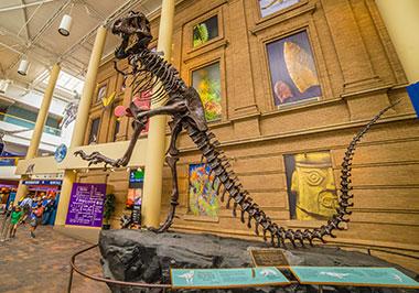 Museum Nature Science