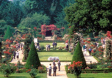 Rose Garden at the Parc de Bagatelle