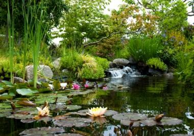 SeaTac Highline Botanical Garden
