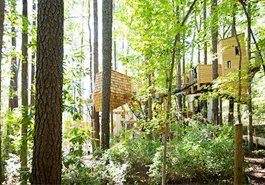 Explore Hideaway Woods at Museum of Life + Science