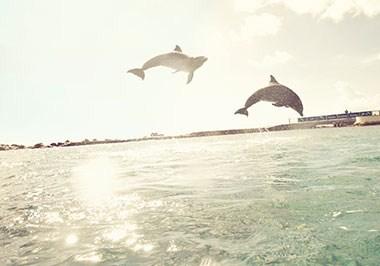 Curaçao Dolphin Academy