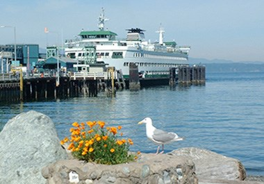 Edmonds Ferry Seagull