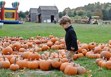 Schenectady County Fall Foliage Festival