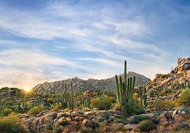 Scottsdale's McDowell Sonoran Preserve